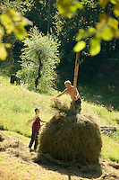 Lavertezzo, Ticino, Switzerland, August 2009.  Farmers collect hay in the village of Lavertezzo. The Valle Verzasca valley offers a spectacular rocky gorge with turquoise waters and a roman bridge. Ticino is the subtropical canton of switzerland where Italian is the first language. Photo by Frits Meyst/Adventure4ever.com
