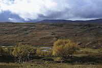 Autumn in the mountain Landscape, landskap,