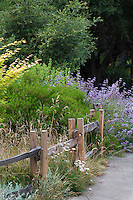 California native plant front yard mixed border garden with trees, shrubs, perennials, and grasses and split rail fence by sidewalk Schino