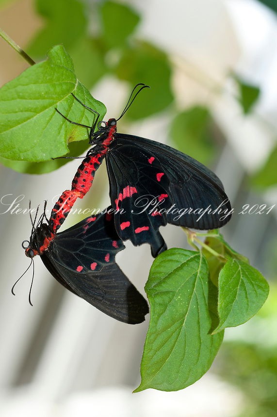 The Butterfly Farm, Havensight Mall, St. Thomas
