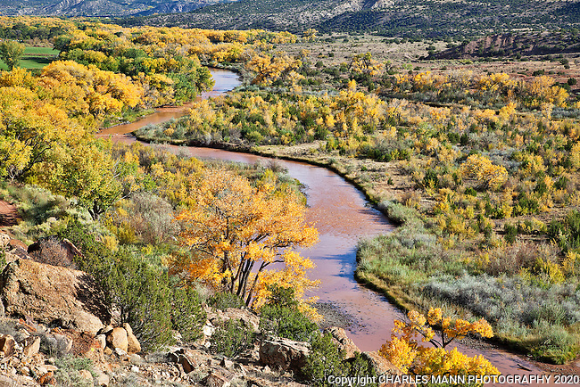 The yellow leaves of the cottonwoods add a carismatic flair to the autumn colors in the area near northern New Mexico village of Abiquiu.