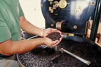 Chief coffee roaster at Bayview Farm examines freshly roasted Kona coffee beans in hopper of oven; Honaunau, Hawaii. Kailua-Kona Hawaii USA Big Island.