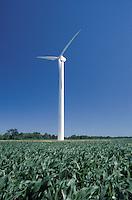 Wind Turbine in Cornfield