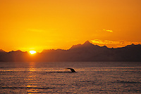 Mount Gilbert, humpback whale tail, sunset, Chugach Mountain range, Prince William Sound, Alaska