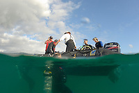 Group of scuba divers in water and on boat, (split shot half underwater), Ecuador, Galapagos Archipelago, San Cristobal Island