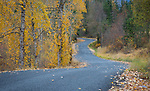 Idaho, North, Kootenai County, Rose Lake. An autumn drive through the chain lakes area.