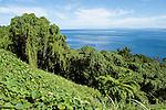 Taveuni, Fiji; dense vegetation along the road near the southern tip of the island
