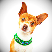 Good dog photography is helping shelter dogs at the Sacramento city animal shelter get adopted.