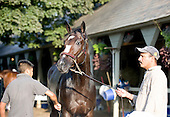 Rachel Alexandra, Saratoga, backside, backstretch, bath, workout, scott blasi, steve asmussen, jess jackson, tod marks photos, saratoga special