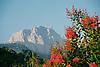 The mountain Mig Dia with Bougainvilleas in foreground<br /> <br /> La monta&ntilde;a Mig Dia con Bougainvilleas en primer plano<br /> <br /> Der Berg Mig Dia mit Bougainvilleas im Vordergrund<br /> <br /> 1840 x 1232 px