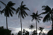 Dusk on the beach on the island of Kiribati in the South Pacific. The islands, and their way of life, is endangered by rising sea water levels which are eroding the fragile atoll, home to approximately 92,000 people.