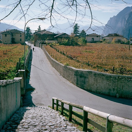 Autumn view of vineyards in the northern Italian Alps, ITALY
