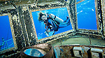 Diver and Reflection on the Kittiwake, Grand Cayman
