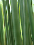 Bamboo forest abstract closeup with artistic motion blur