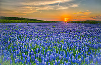 We wanted to pull one more image of the Muleshoe bluebonnets out from 2014 from our first capture of these incredible field of wildflowers.   It was a little later on as the sun dipped a little lower and had a lot more orange colors in the sky for sunset.