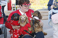 """Vickie Jackson of San Diego sits with her daschunds, Princess, Bella and Jazzi at the Spreckels Organ Pavillion in  San Diego California, December 23rd, 2007.  Members of the San Diego Dachshund Club and other dog owners  paraded across the stage  with their pets while organist Carroll Williams and signer Johnny Hochgraefe performed """"All Creatures Great & Small"""" during the annual Christmas Sing-Along."""