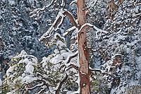Snowfall in Sedona