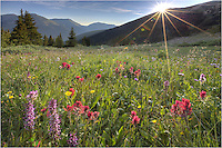 From Butler Gulch, the summer Colorado wildflowers boom in a variety of colors. I awoke and hit the trial before 4:00am to arrive at this location near Empire, Colorado, so catch the first rays of sunlight as they streamed over the mountainside. This picture of Colorado wildflowers was taken near the end of July, and the short 2 mile hike offers a great reward.