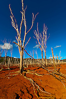New Caledonia-Blue River Provincial Park