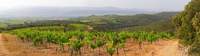 View over the plain from the top of the vineyard hill. Domaine du Mas de Daumas Gassac. in Aniane. Languedoc. Muscat grape vine variety. La Cerane plot. France. Europe. Vineyard.