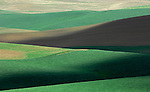 Palouse valley farm fields in the spring