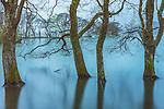 Trees partially submerged, Lake Biwa, Japan