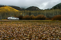 With a carpet of leaves leading to the horse, and naked aspen behind, it is clear:  Fall is nearly done,  winter is nearly here.  Photographed near Bear Lake, Utah.
