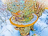 &quot;COLORFUL CONK&quot;<br />