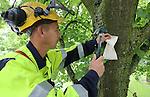 Foto: VidiPhoto<br /> <br /> SPRANG-CAPELLE/ZEVENBERGEN - Larven (adalia bipunctata) van het inheemse lieveheersbeestje blijken de beste en meest milieuvriendelijke oplossing tegen de overlast van luizen. De diertjes worden in open zakjes in bomen gehangen en verspreiden zich vandaaruit over de hele boom. In het larvestadium eten de kevertjes de helft al het voedsel dat ze tijdens hun leven naar binnen werken. De luizen zorgen voor overlast door een zoete, plakkerige vloeistof af te scheiden. Lieveheersbeestjes zijn er dol op, maar het het is bijna niet te verwijderen van auto's en terrasmeubelen. De adalia wordt geleverd door tuinspecialist Vos Capelle.