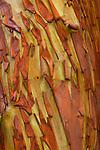 Madrona bark, San Juan Island, Washington