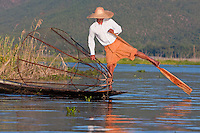 Myanmar, Burma.  Fisherman Looking for a Place to Set his Net, while rowing with one leg, in the style common to Inle Lake, Shan State.