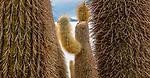 Altiplano, Bolivia , Salar de Uyuni, Incahuasi Island