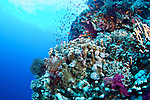 Biodiversity of Red Sea, Egypt