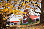Fall foliage at Pomfret Highlands Farm in Pomfret, VT, USA