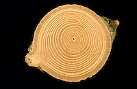 NATURE STILL LIFES<br />