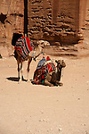 Camels used as transportation in Petra