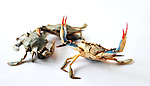 Blue crabs. For the Bluestem Cookbook.