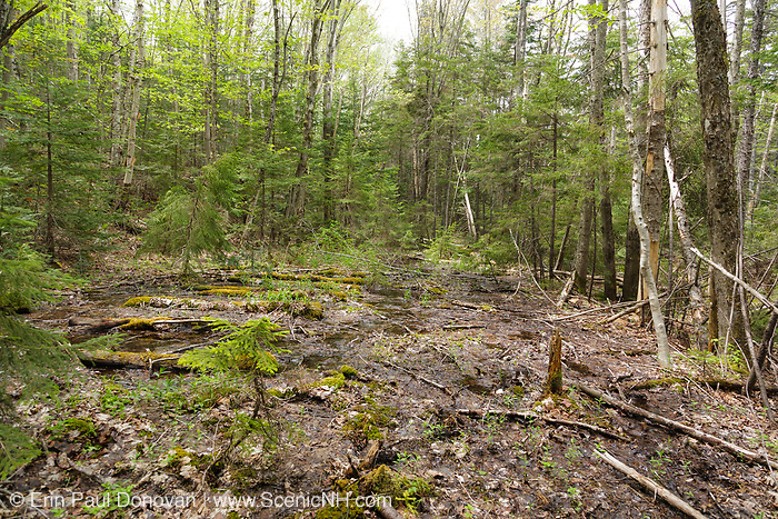 Remnants of a spur line of the abandoned East Branch & Lincoln Railroad (1893-1948) in the Thoreau Falls Valley of the Pemigewasset Wilderness in Lincoln, New Hampshire. This spur line came off the mainline that lead to Camp 23. It crossed the North Fork of the East Branch of the Pemigewasset River, near Jumping Brook, and traveled a short distance on the East side of the North Fork ending at a landing / work area. This is near the end of the spur line, and it had two lines of track. Railroad ties are still visible on the left.