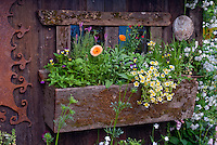 Windowbox flower garden at rustic shed building, heirloom and antique flowers, climbing white Roses Rosa, pot herb calendula, charming old fashioned feel container garden, rusted iron ornament, Limnanthes douglasii, Campanula, Lavandula, Viola tricolor, Digitalis