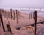 The remains of sea grass adorn what is left of a dune fence after a major storm in November, 2009, washed away the dune at Rehoboth Beach, Delaware, USA.