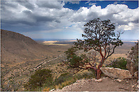 In West Texas, and especially in Guadalupe Mountains National Park, the Texas Madrone tree is an unusual sight. The bark from this tree is a dark red. You'll find this tree on the hike to Guadalupe Peak and El Capitan, as well as other places in the park