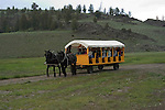 WY: Wyoming; Yellowstone National Park,.Westeren cookout at Roosevelt Lodge with.wagon rides and horse rides..Photo #: yellow1585.Photo copyright Lee Foster, 510/549-2202, lee@fostertravel.com, www.fostertravel.com..