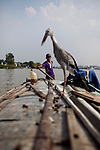 Tuan, 16, steers the boat while his father fishes on the Hau Giang River, a tributary of the Mekong River, in Chau Doc, in the An Giang Province, Vietnam. When the Mekong River reaches Vietnam it splits into two smaller riveres. The &quot;Tien Giang&quot;, which means &quot;upper river&quot; and the &quot;Hau Giang&quot;, which means &quot;lower river&quot;. Photo taken on Monday, December 7, 2009. Kevin German / Luceo Images