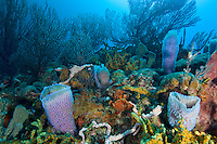 Coral and sponge scenic<br />