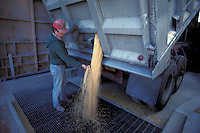 Trucker unloads feed corn into silo holding trench