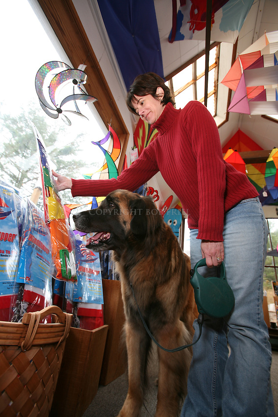 Leonberger dog Murphy shopping for kites in Cannon Beach, Oregon