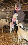 Foto: VidiPhoto<br /> <br /> ELSPEET - Trots kijkt schaapherder Gartman van de Steeg dinsdag naar zijn pasgeboren lammetjes. Inmiddels zijn er 103 geboren, maar nog staat de teller niet stil. De geboortegolf houdt aan omdat nog zo'n 30 schapen moeten bevallen. Van de 158 schapen van de Elspeetse schaapskudde waren er 100 drachtig. Achttien van hen brachten een tweeling ter wereld. Pas over enkele weken kan de definitieve balans opgemaakt worden. De Elspeetse heideschapen zijn officieel de eerste kudde die dit jaar lammetjes krijgen. Omdat de schaapskooi midden in het dorp staat en het drie kwartier lopen is naar de hei, mogen de lammetjes pas mee als ze drie weken oud zijn. Dan zijn ze groot genoeg om de flinke afstand af te leggen en niet meer zoek te raken in het hoge gras op de hei tussen Elspeet en Vierhouten. De bij toeristen populaire Elspeetse kudde kan zichzelf prima bedruipen, in tegenstelling tot de meeste andere schaapskuddes. Behalve dat er zoveel mogelijk (door de gemeente betaalde) graasdagen zijn, is het ook mogelijk voor het publiek om lammetjes en schapen te adopteren. Daar is veel belangstelling voor. De Elspeetse kudde is ook de eerste schaapskudde waar als erkend leerbedrijf stage gelopen mag worden. Zaterdag is er een open dag gehouden.