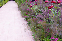 Red Peonies Paeonia, irises , astrantias flowers with purple Fennel herb in spring bloom with white pathway for purple and red and green color theme, lush and colorful perennials garden bed, flowers and herbs interplanted