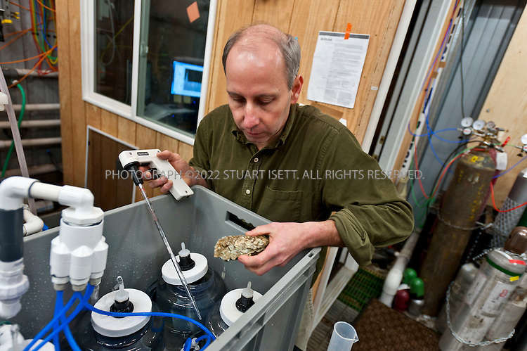 1/14/2011--Seattle, WA, USA..NOAA biologist Paul McElhany at work in his lab where he works with oysters trying to see the effect that CO2 in the water have onthe creatures. While working on Northwest salmon recovery, he learned that ocean and water acidification could change the food availability and species interactions of the entire marine ecosystem..©2011 Stuart Isett. All rights reserved.