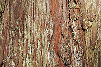 4 August 2006: Detail of redwood tree bark in the forest  central California along the coast of Big Sur. Graphic,art, texture, brown,book.